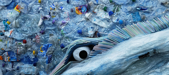 balena morta plastica
