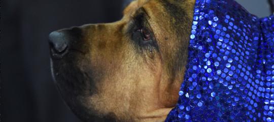 Non c'è da vergognarsi a fare la vocetta al proprio cane. Lo dice la scienza