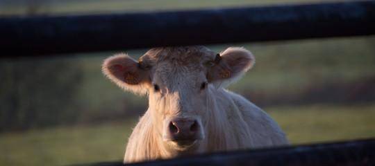 Così in Madagascar i bovini vengono salvati dal nucleare
