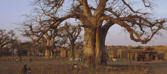 Le proprietà del frutto di baobab, che diventerà un super cibo anche in Europa