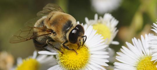 Alla fine l'Ue ha deciso di vietare i pesticidiche uccidono le api