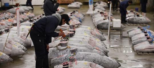 Gli effetti salutari del tonno sono molti (anche di quello in scatola). Cosa sapere