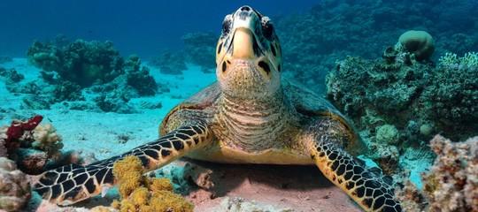 Perché in Usa nascono più tartarughe maschio che femmina. Uno studio