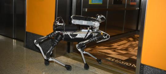 E voi cosa fareste con un cane robot?