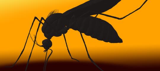 Attenzione: è cominciata la stagione della zanzara tigre. Cosa sapere
