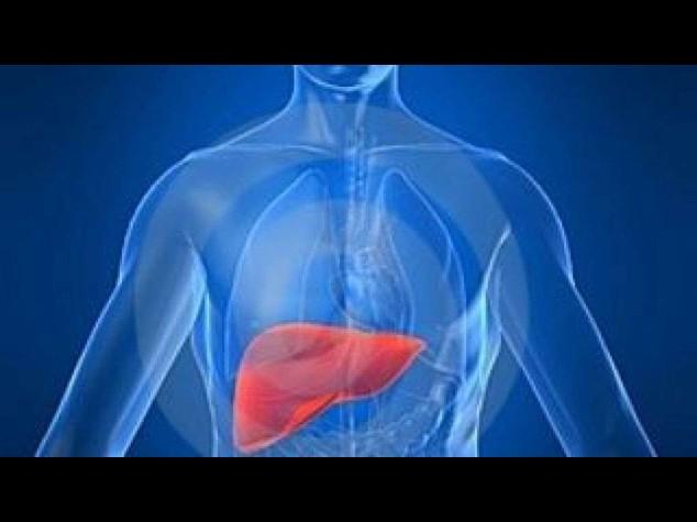 Fegato filtra minacce provenienti da batteri intestinali