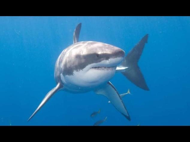 Spagna: allarme-squali, chiuse per un giorno sei spiagge catalane