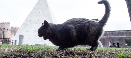 Anche cani e gatti a rischio hacker, le falle dei collariGps