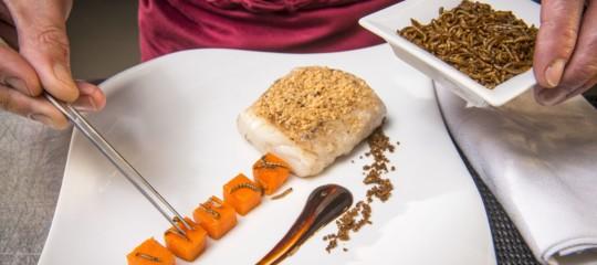 Food InnovationProgram Olanda