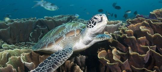 Nel Mediterraneo una tartaruga su due ha della plastica nello stomaco