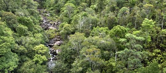 foreste africane pericolo biocarburanti