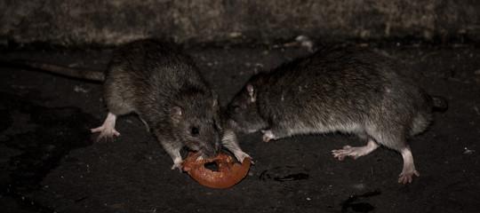 carcere opera milano topi