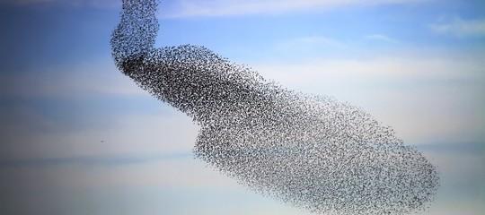 Il segreto delle spettacolari coreografie di uno stormo di uccelli