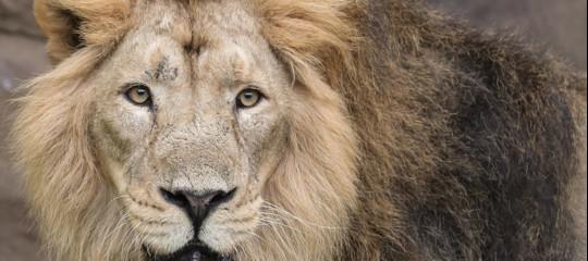Alla fine quanti leoni sono rimasti sulla faccia della for Quanti sono i deputati alla camera