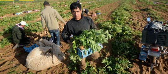 Caporalato: braccianti-schiavi a un euro l'ora, arresto a Lecce