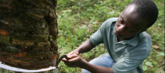costa d'avorio cacao caucciu