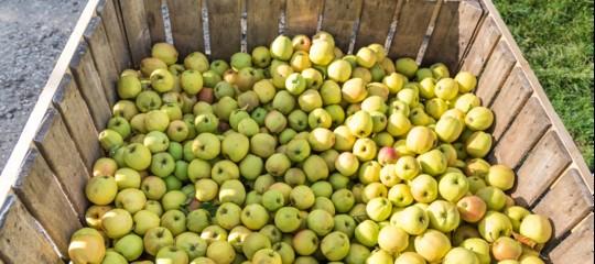 Rinchiude compagna cassone frutta
