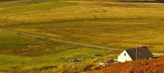 Anche in Nord Europa i prati verdi sono diventati gialli