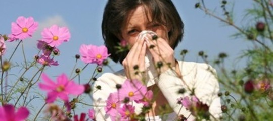 Ricerca: undottorandodi Pisa scopre i meccanismi che provocano le allergie ai pollini