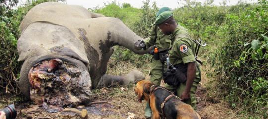 In Africa è avvenuta la più grave strage di elefanti mai registrata