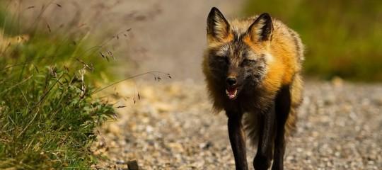 Gli animali che vivono nelle isole intorno al mare di Bering stanno morendo