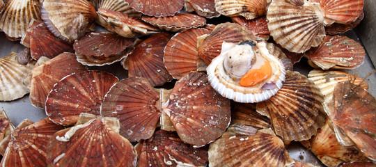 I pescatori francesi e inglesi hanno trovato un accordo per la pesca dellecapesante