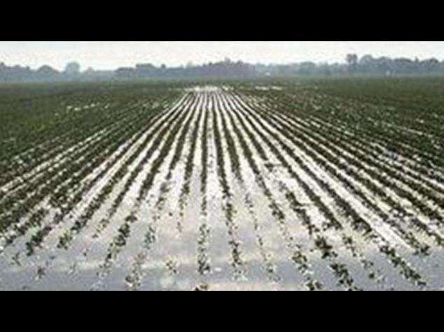 Coldiretti: la 'gelida estate' ha fatto un miliardo di danni all'agricoltura