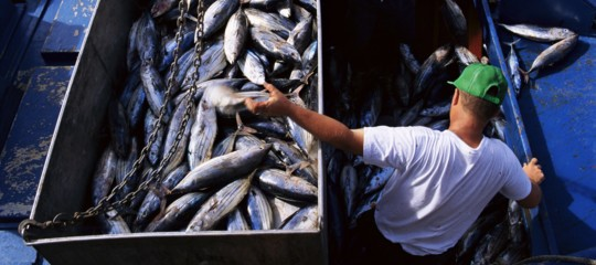 pesce pesca alimentazione cibo