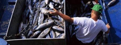 Pesce pescherecchio frode alimentare (Afp)