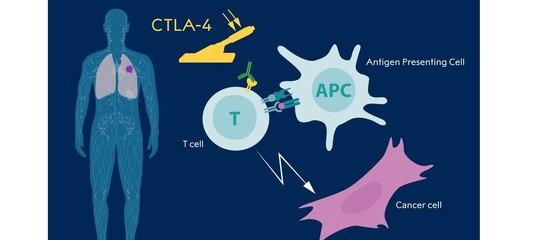Che cos'è l'immunoterapia che ha vinto il Nobel per la medicina