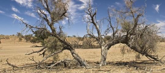 Il fabbricante di boschi ha trovato il modo di fare crescere alberi anche nel Sahara