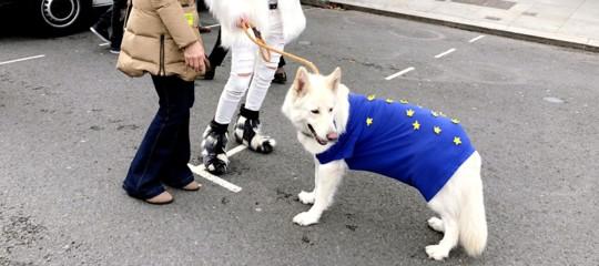 passaporto ue cani gatti brexit