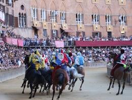 Palio di Siena, l'Ape chiede l'abolizione per crudeltà