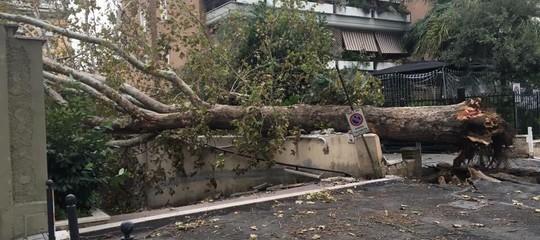 Maltempo albero su auto Roma grave giovane