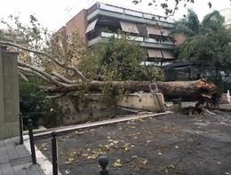 Un albero è caduto su un'auto ai Castelli romani, grave un giovane
