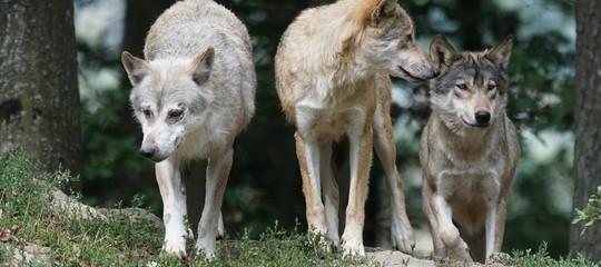 Allarme Wwf: decimato il 60% della fauna selvatica in 44 anni