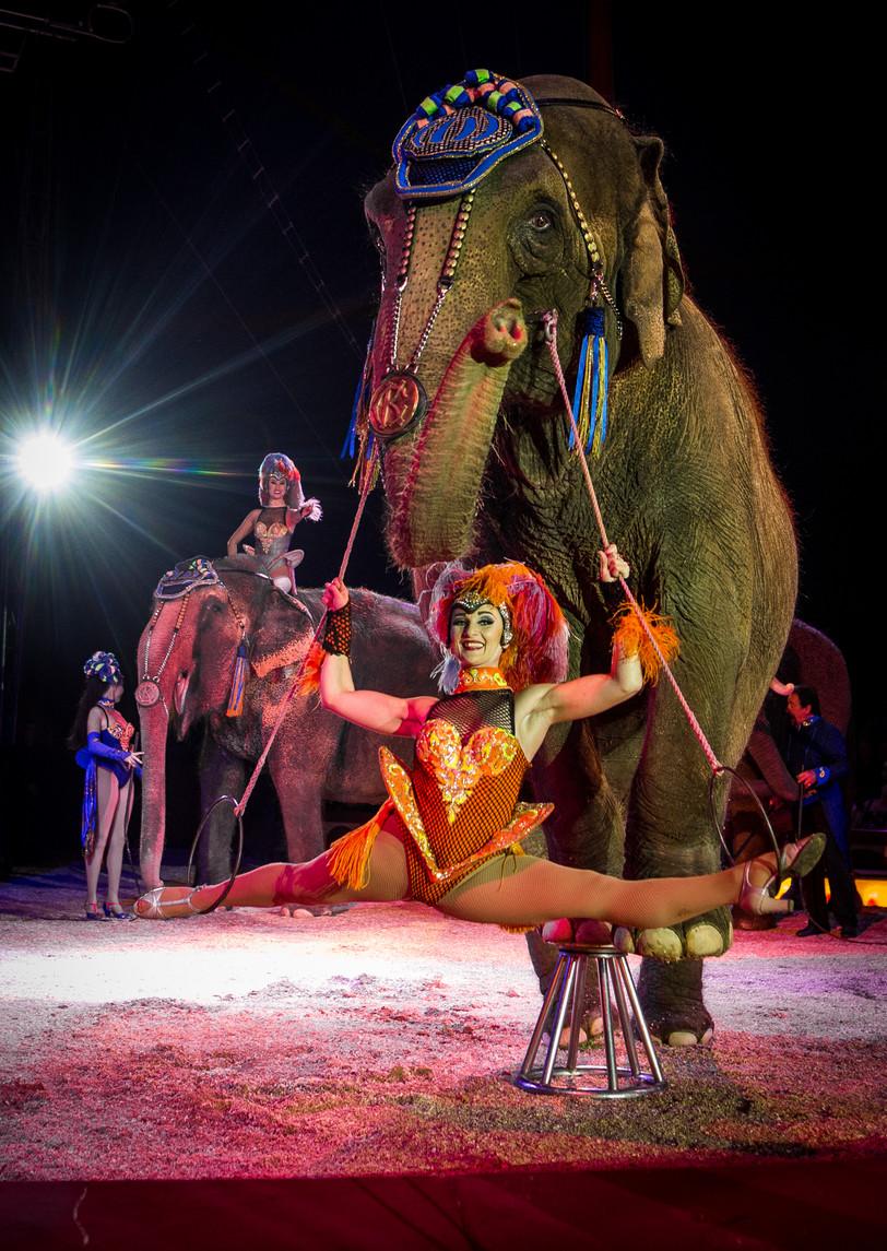Questo Natale nei circhi vedremo ancora elefanti e leoni?