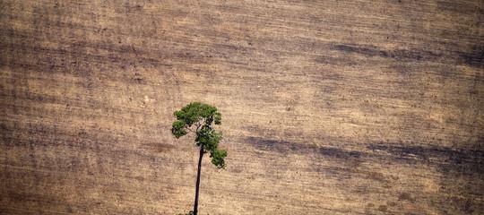 disboscamento amazzonia