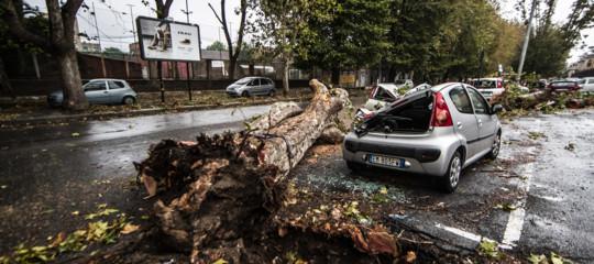 Nelle città cadono tutti questi alberi anche perché parcheggiamo male