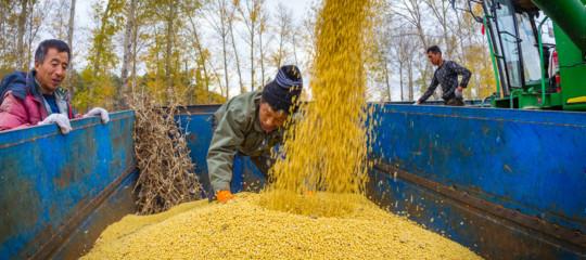 Gli effetti economici e sociali delle monoculture di soia. Un documentario