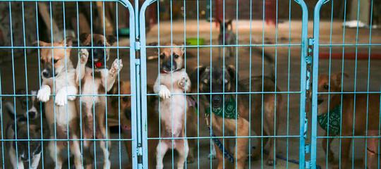 germania cani adottati
