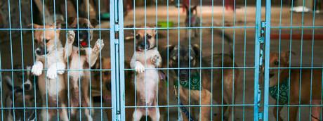 Perché in Germania non si possono adottare cani sotto Natale