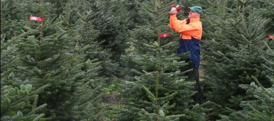 inquinamento alberi natale finti