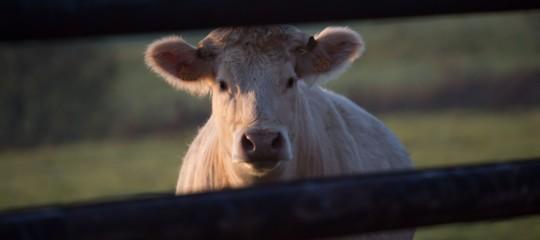 In Israele è stata realizzata la prima bistecca artificiale in laboratorio