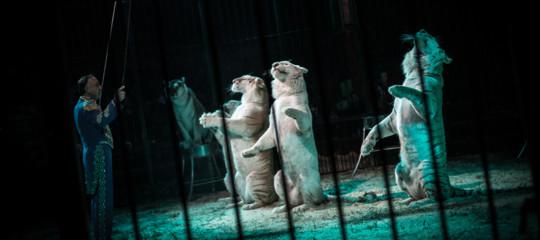 animali circhi divieto