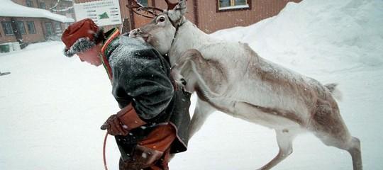artico renne caribu