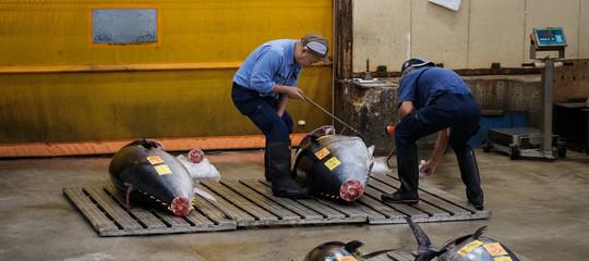 Giappone: asta record a mercato del pesce, un tonno venduto a 2,7 milioni di euro