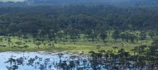 Silvia rapita in Kenya, XLVI giorno. Le ricerche nella Foresta di Boni