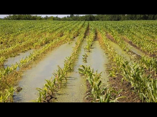 Maltempo: danni per 300 milioni all'agricoltura