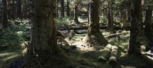 WoodWideWeb, la rete sotterranea che collega e fa parlare gli alberi tra loro